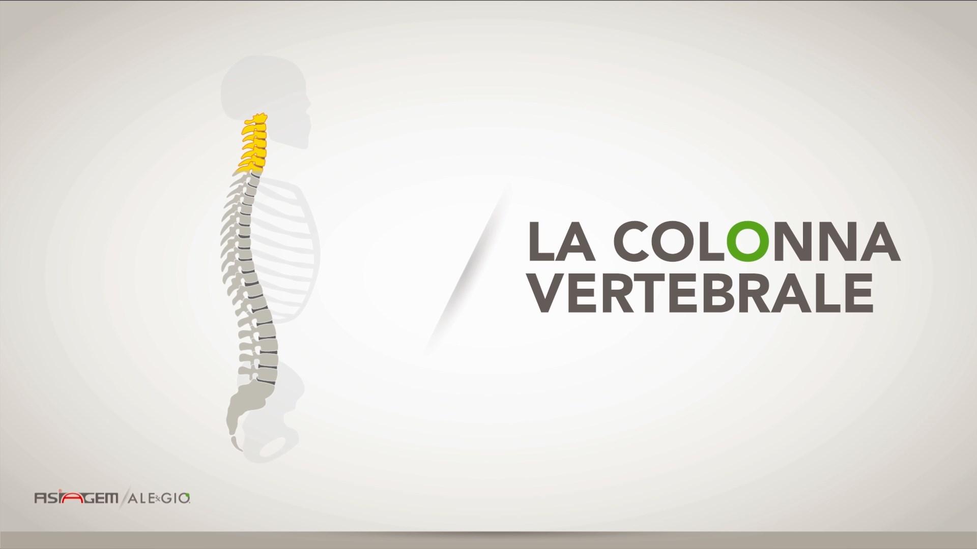 La colonna vertebrale